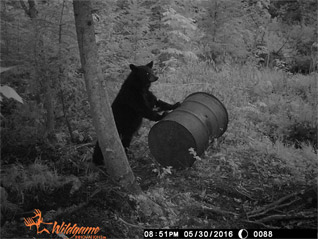 Black Bear slideshow.